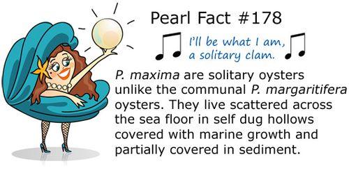 PearlFact178