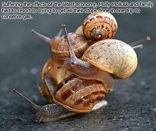 Snail-Pileup-Winner2