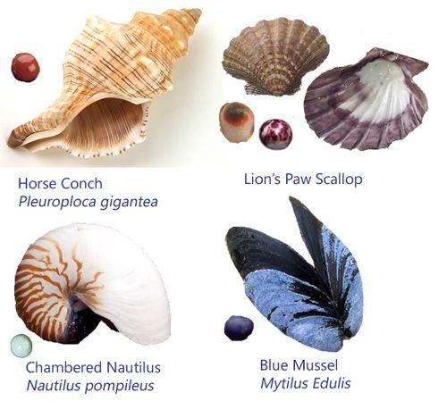Mollusks1