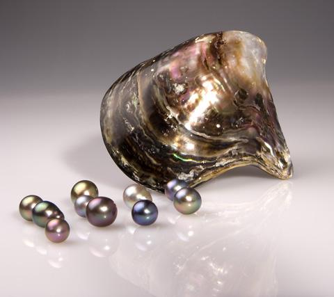 Cortez1-Pteria sterna shell