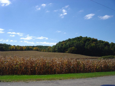 Farmland_1
